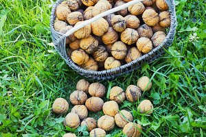 Basket with walnuts on the earth