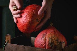 Pumpkins in woman's hands