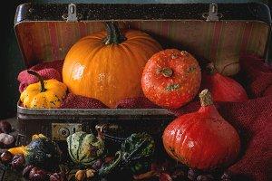 Assortment of pumpkins in suitcase