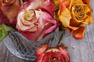 Bunch of Withered Roses