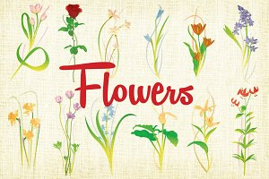 Flower Vector Illustrations