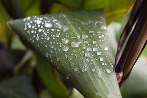 Raindrops on autumn