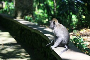 Monkey forest in Ubud,Bali