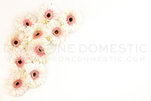 Styled Photo - Daisy Flowers