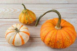 Decorative Pumpkins and Gourds