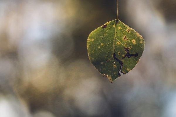 Single Quaking Aspen Leaf In Fall High Quality Nature Stock Photos Creative Market