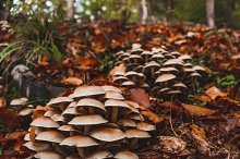 Tiny mushrooms in autumn forest