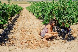 woman picking grapes in vineyard