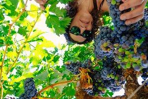 Below view of woman picking grape