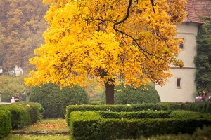 Beautiful Autumn Yellow Tree