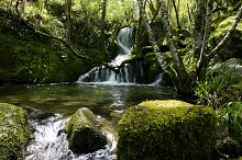 natural river in the forest