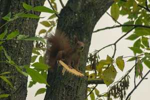 Squirrel 3