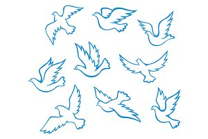 Pideons and doves birds