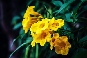 Yellow Flower in retro filter effect