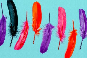 Background feathers