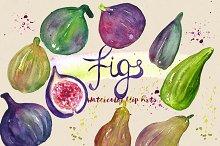 Figs. Watercolor Clip Art.