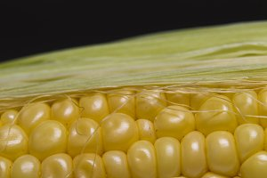 Grains of corn cob. Macro