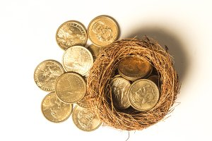 Money in the nest white background