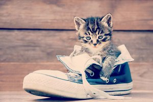 Kitten and shoe