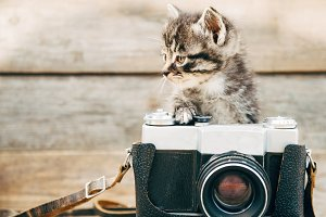 Curiosity kitten with vintage camera