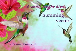 Set: Hummingbirds