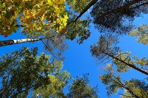 Autumn sky and foliage.