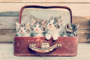 Kittens in retro suitcase