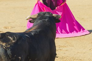 Spanish bullfighter
