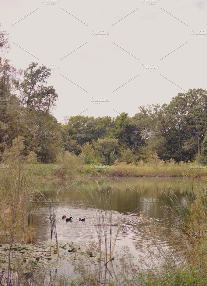 3lines_lakeducks.jpg - Nature