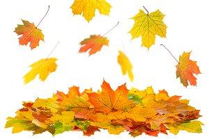 Autumn Leaves PSD