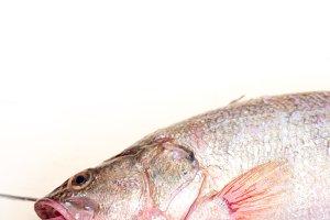 fish 005.jpg