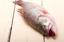 fish 004.jpg