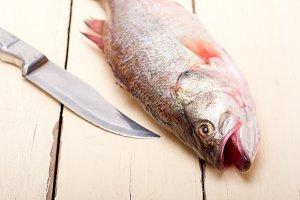 fish 006.jpg