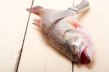 fish 008.jpg