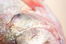 fish 002.jpg