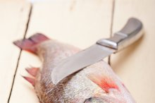fish 009.jpg