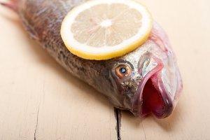 fish 016.jpg