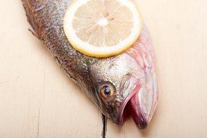 fish 014.jpg