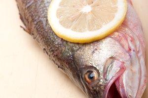 fish 012.jpg