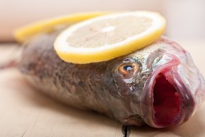 fish 015.jpg