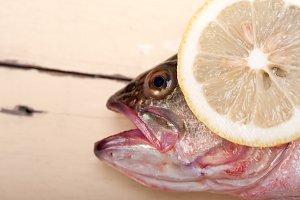 fish 017.jpg