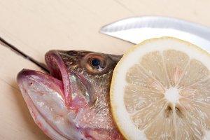 fish 024.jpg