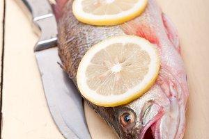 fish 021.jpg