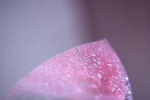 Wet transparent polyethylene film