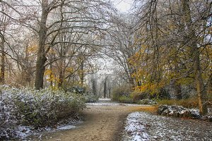 Autumn with snow in park
