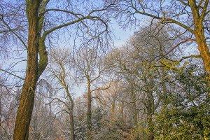 Snow on trees in autumn