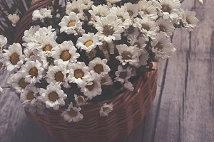 small daisies in a basket