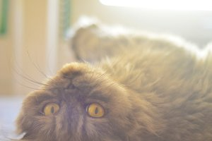 Cat Enjoying the Sun