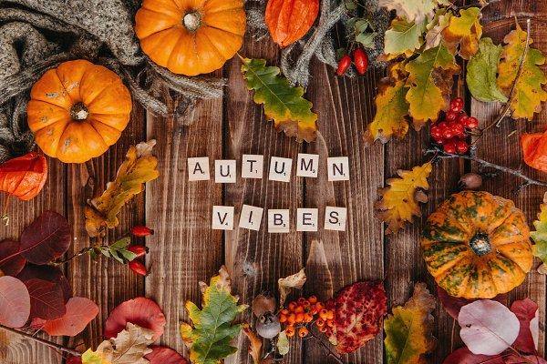 Autumn vibes with pumpkins | High-Quality Nature Stock Photos ~ Creative  Market