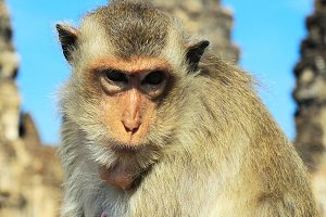 Closeup monkey portrait